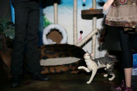 Cat Paradise Shop 06