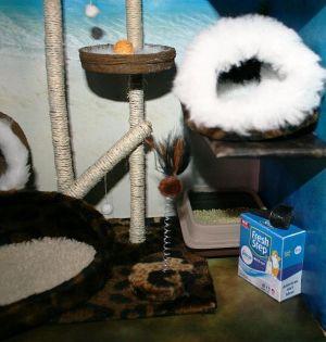 Cat Paradise Shop 04