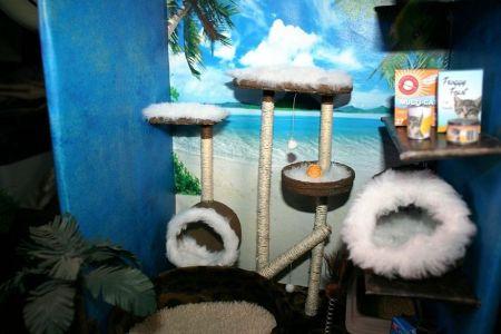 Cat Paradise Shop 05
